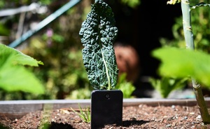 We planted this iPhone and it only grew one kale leaf (Alexis Madrigal).