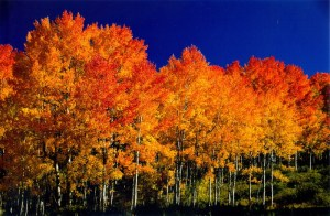 http://sportpressone.wordpress.com/tag/aspen-trees/