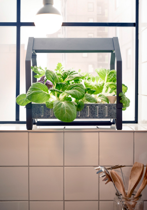 Indoor Gardening at IKEA