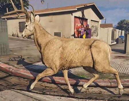 Deer in GTAV