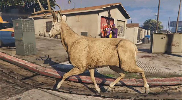 Deer Cam in Grand Theft Auto V – just a few more days to watch