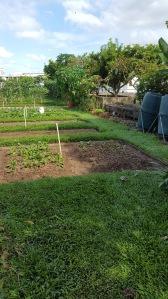 Vegetable Beds at the Khoo Teck Puat Hospital Rooftop Garden