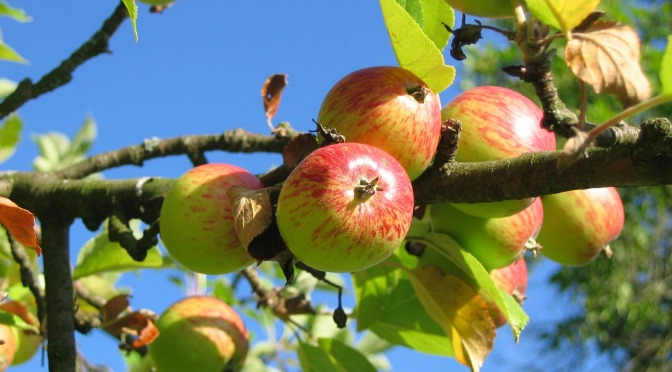 OrchGard – a community digital orchard/garden funded by @natyouthagency