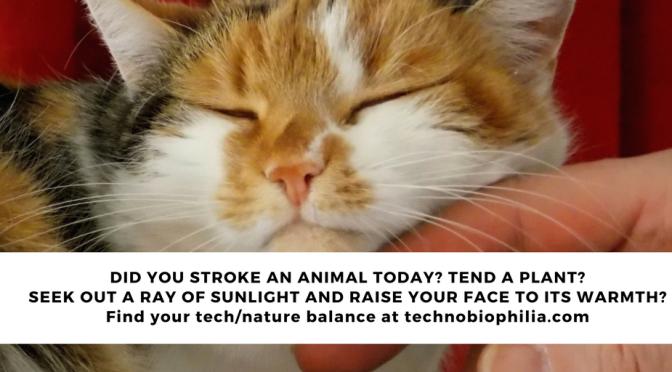 TIP: Stroke an animal. Tend a plant.